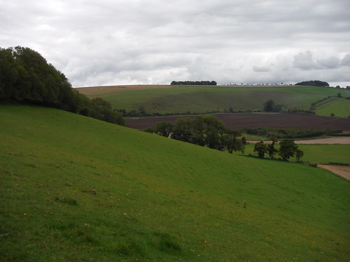 Charlton Down from Peckons Hill