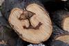 Mushroom Shaped Spalt