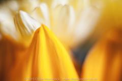 Macro floral beauty