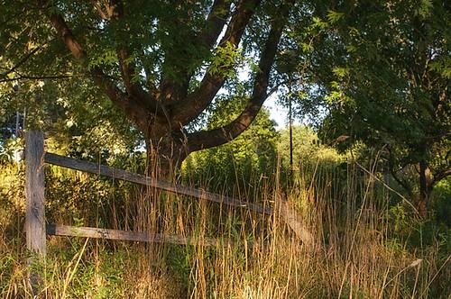 wMcArthur_fence