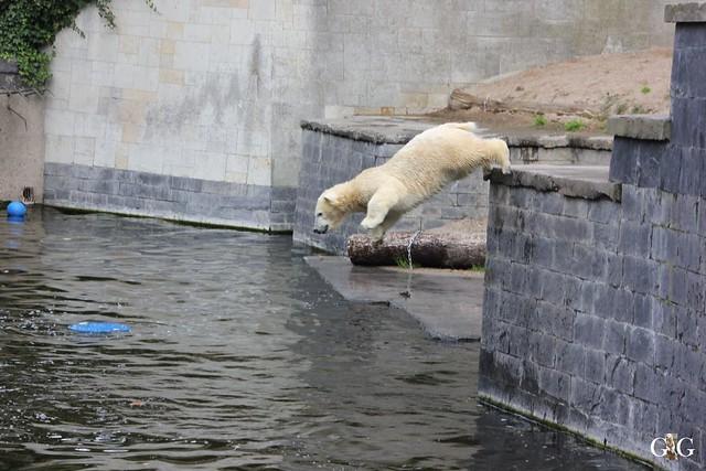 Zoo Rostock 19.09.2015121
