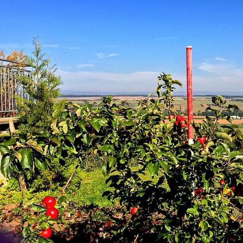 #turingia #thüringen #bleicherode #herbst #autumn #sun #sonne #apfelbaum #appletree #harz