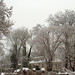 ice storm 2/2/11 by Nesster