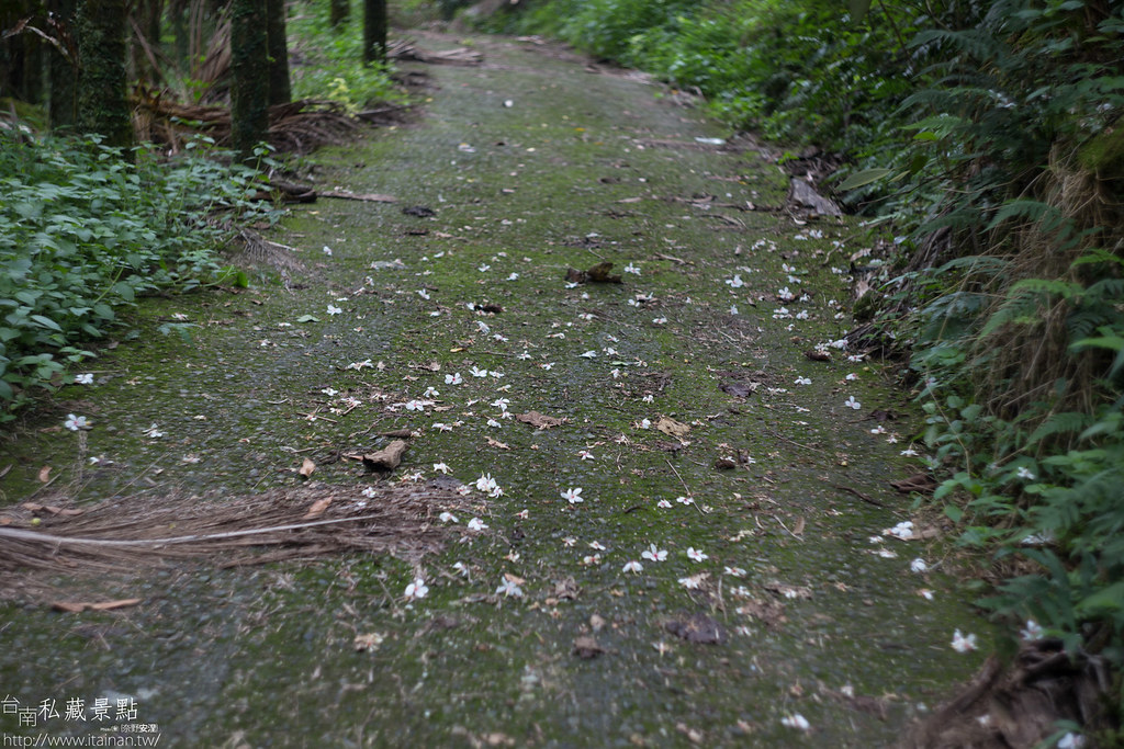 村長咖啡-天池咖啡步道 (24)