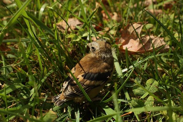 Baby Bird