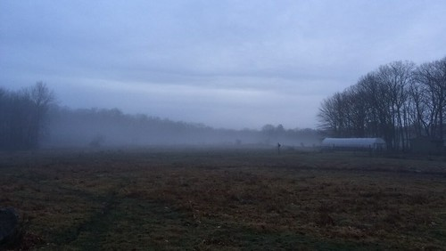 Foggy Farm Christmas