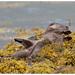 Otter by Pete Walkden