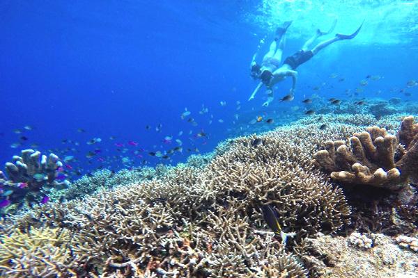Underwater Maratua 4