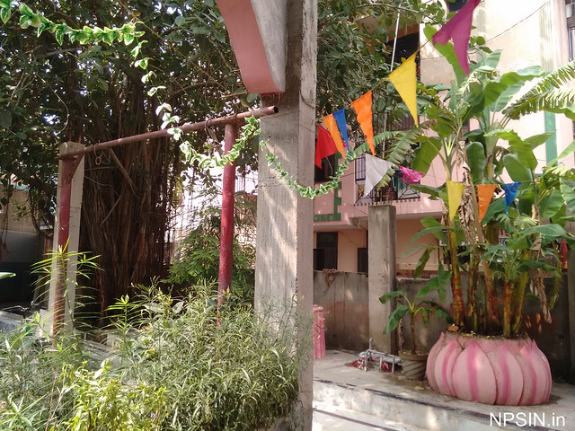 Greenery with Holy Banana Tree in temple premises