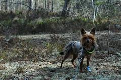 Herr Hund april 2015