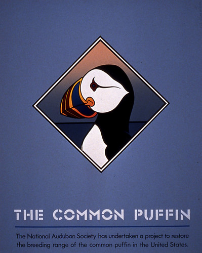 9_TGW_Rob-Moore_The-Common-Puffin-1980