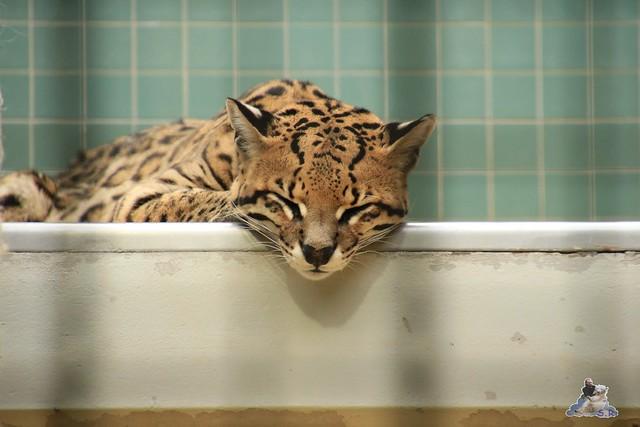 Zoo Berlin 18.09.2015   083