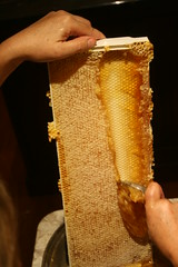 honey comb IMG_3904