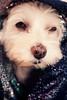 My dog, the model by ebonyshouston