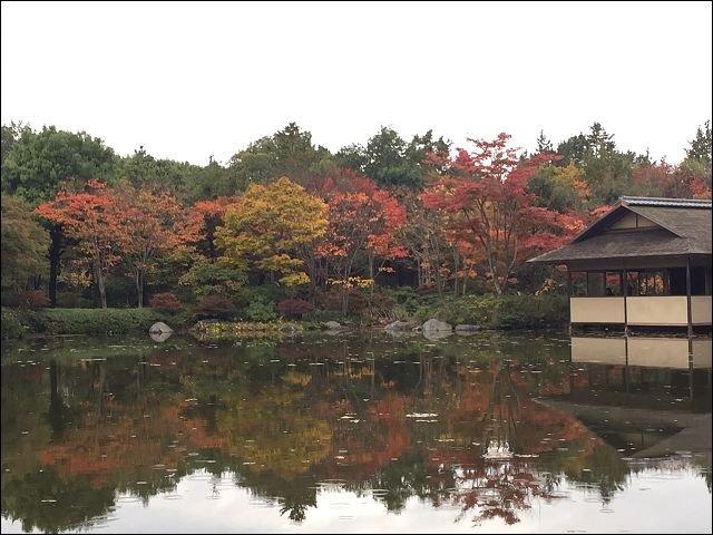 201511昭和公園_4537