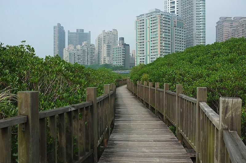 紅樹林自然步道DSCF6109