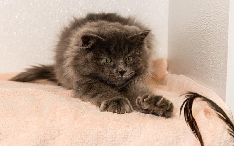 Kitten Vixen