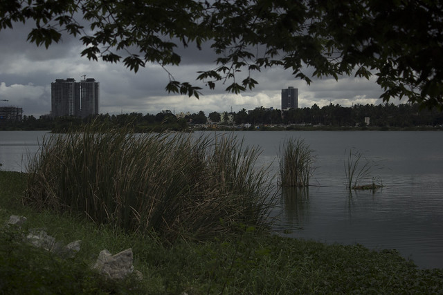 Clumps of bulrushes rise above the water; clumps of concrete define the boundaries of Karle SEZ (Special Economic Zone) in the distance. The SEZ abuts the Outer Ring Road, connecting Hebbal to KR Puram.