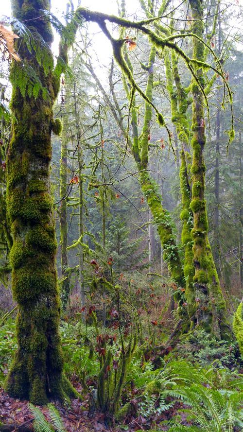 ForestPark3