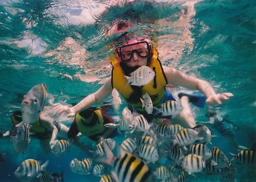 reef-snorkeling-377390_1280