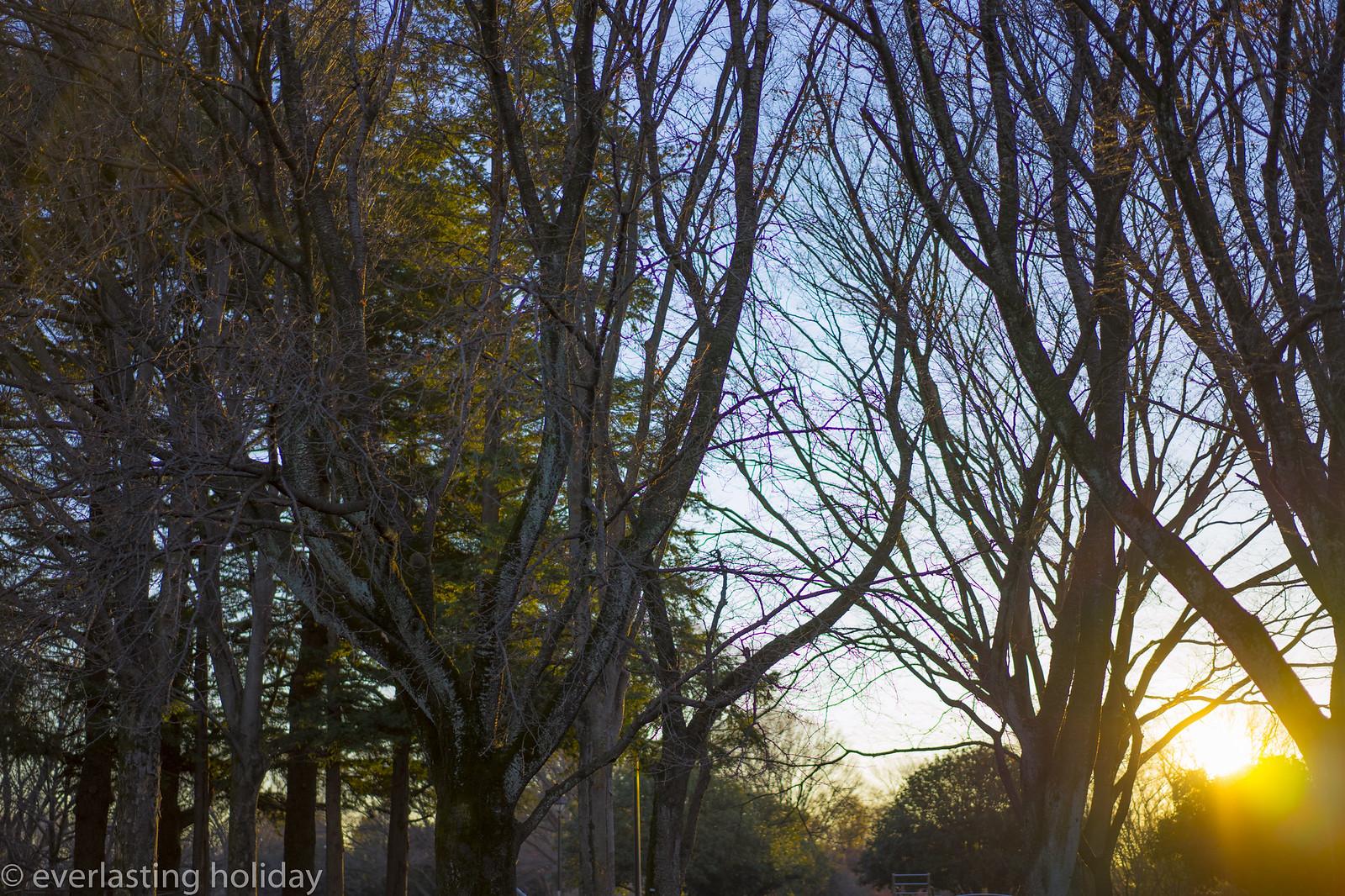 小金井公園 Koganei Park-0019