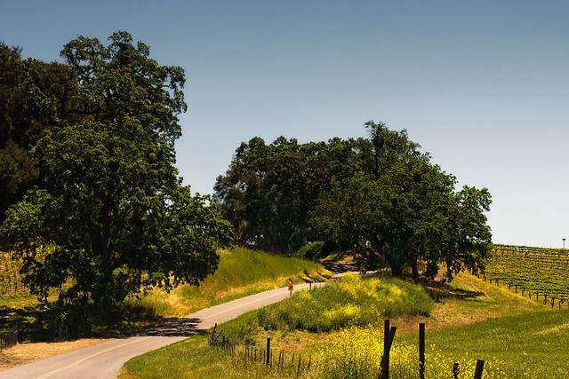A Country Road in the Paso Robles Wine Country