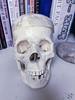 275:365 - 10/17/2016 - Skull