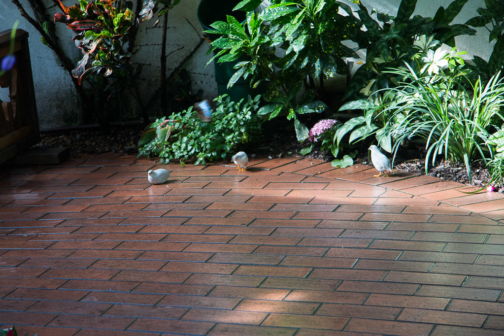 Birds at the Butterfly Conservatory in Key West