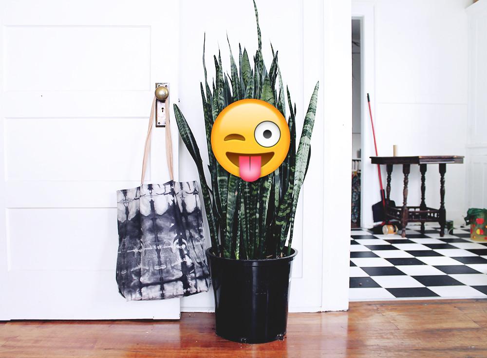15.09.07.emojiplant