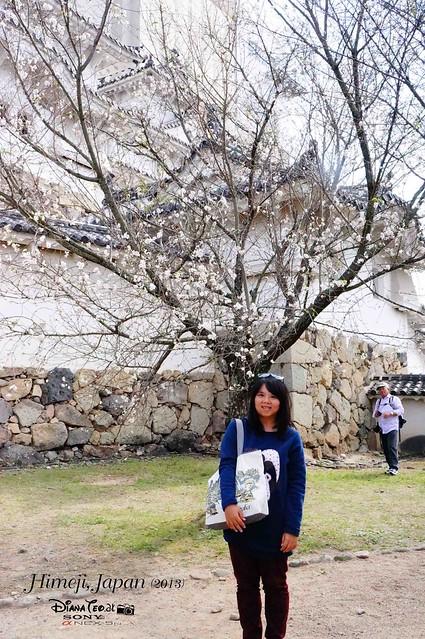 Japan - Himeji Sakura 02
