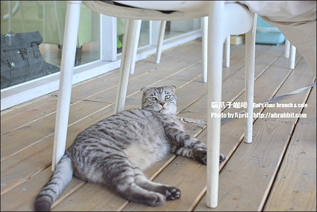 22334848038 4735a6b517 z - [台中]貓爪子咖啡--早午餐豐盛,店內有四隻貓兒超可愛!@北區 大德街 中國醫