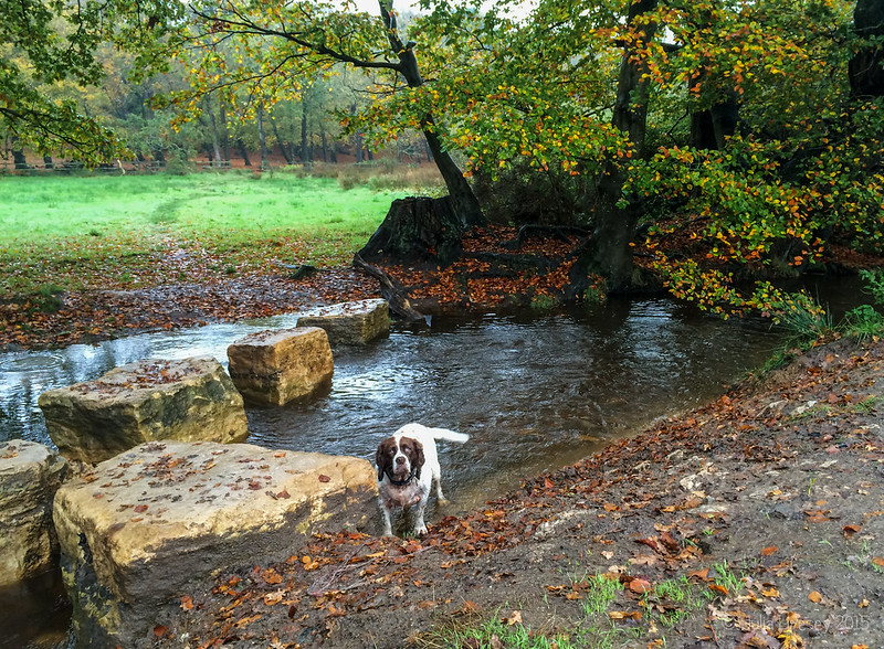 Max by the stepping stones