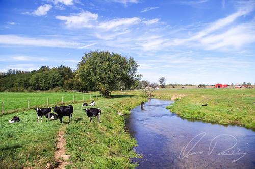 Amish Pasture