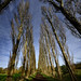 Poplar Avenue by JEFF CARR IMAGES
