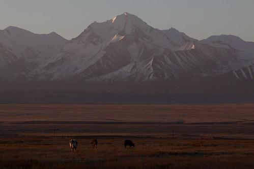 travel viaje mountains sunrise landscape asia paisaje amanecer silkroad montaña paysage centralasia kyrgyzstan cordillera montañas pamir asiacentral rutadelaseda kirguistan