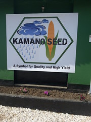 Kamano Seed Company in Zambia Photo credit: CIMMYT