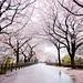 Kanazawa Castle Park 金沢城公園 by 西文 Simon