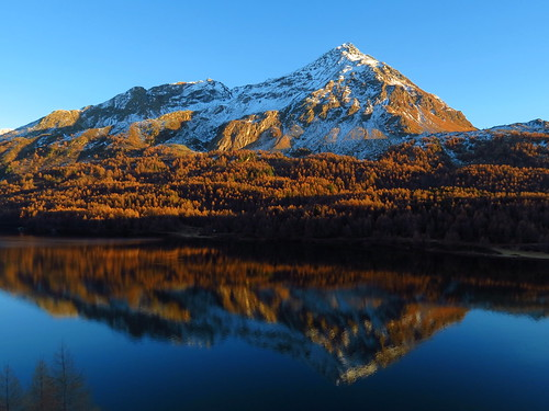 autumn sunset white mountain lake snow alps colors landscape switzerland evening woods outdoor hike larch engadin lärche oberengadin graubünden maloja pizbernina biancograt silsersee lamargneta
