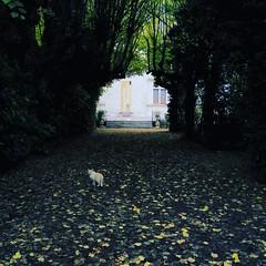 Découvertes du #poitou : le château couvert est bien caché. Le petit #chat, un peu moins.