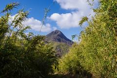 金時山を眺めながら矢倉沢峠へ下る