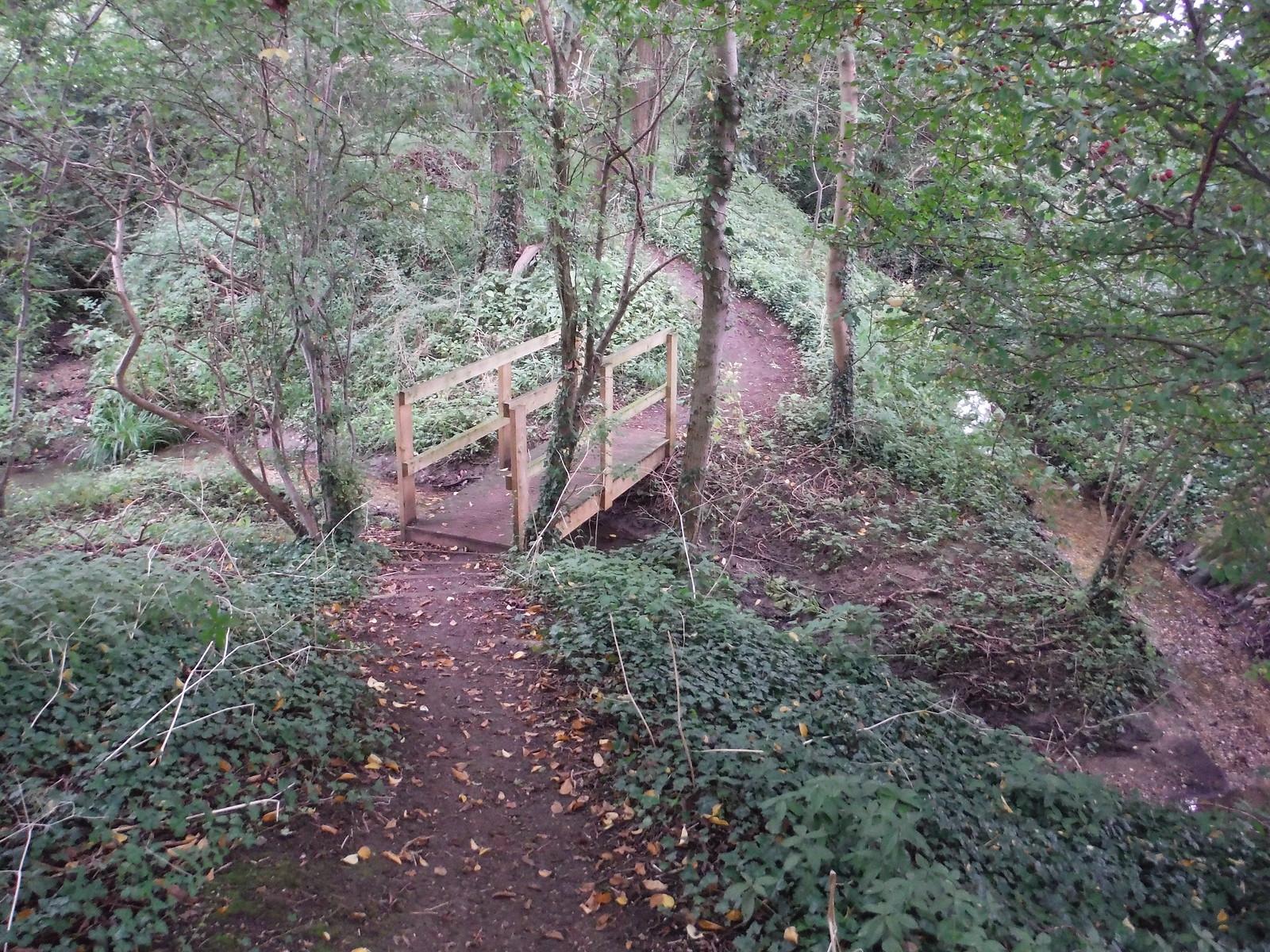 Path through wood in Henry Moore Foundation SWC Walk 164 Roydon to Sawbridgeworth via Henry Moore Foundation