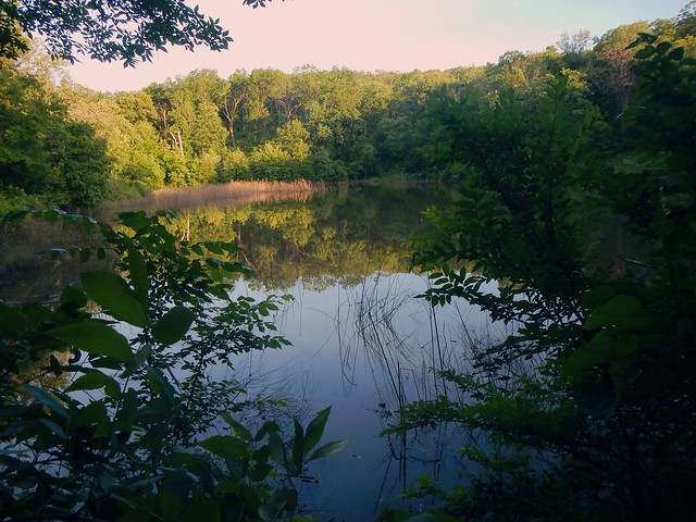 Turkey Mountain Pond May 2015