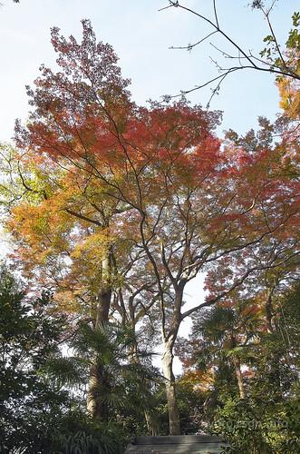 【写真】2014 紅葉 : 法然院/2018-10-19/IMGP7492
