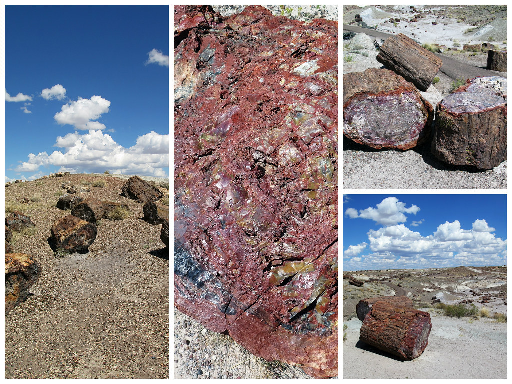 petrified_forest