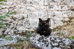 cat135, citizen of Kotor