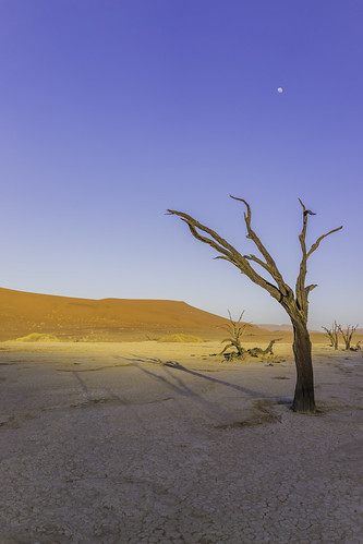 moon tree nature vertical sunrise landscape nationalpark sand desert dune wideangle unescoworldheritagesite unesco worldheritagesite un unitednations educational sanddune 自然 namibia acacia wattle 자연 deadvlei 世界遗产 日出 國家公園 나무 camelthorn 일출 colorimage namibdesert worldculturalheritage thorntree claypan 沙丘 hardap namibnaukluftnationalpark dooievlei acaciaerioloba whistlingthorn kameeldoring 纳米比亚 유네스코 사구 나미비아 국립공원 scientificandculturalorganization republicofnamibia 유네스코세계문화유산 namibsandsea giraffethorn vastplace lorganisationdesnationsuniespourl'éducation onuésc vachelliaerioloba 納米布諾克盧福國家公園 納米布沙漠 나미브사막 하르다프주 mogohlo mogôtlhô 金合欢 아카시아속