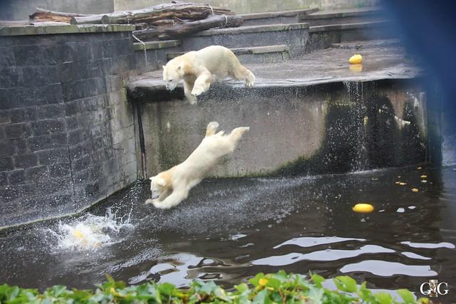 Besuch Zoo Rostock 17.10.201530