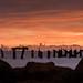 Ruined Dock by mohrgo