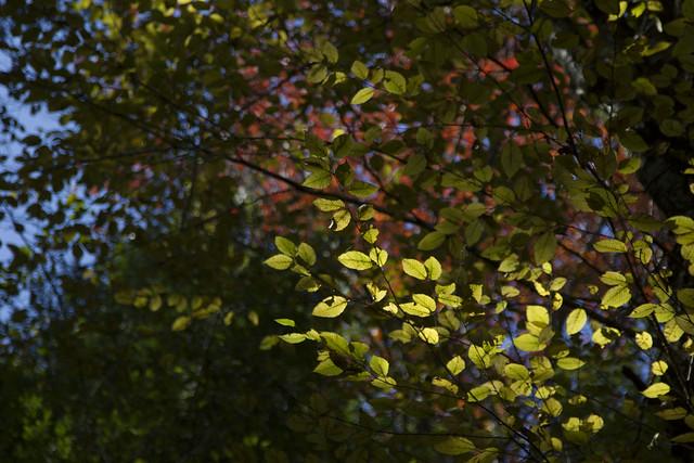 IMG_6763Autumn Leaves