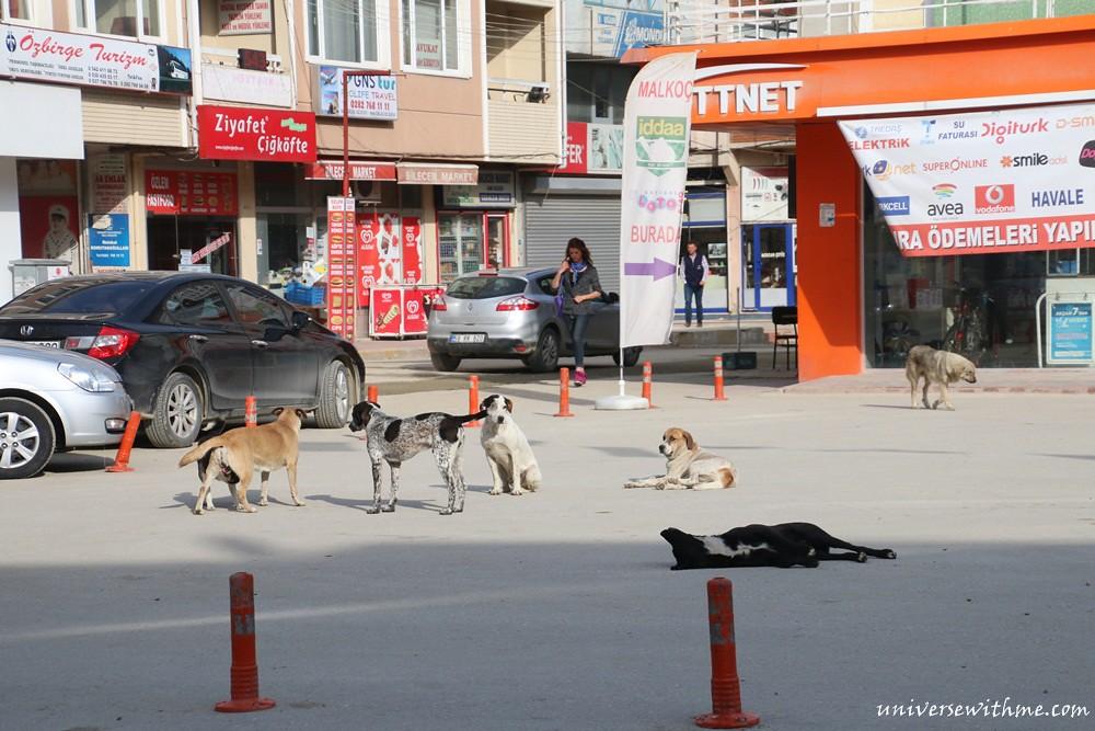 A_Turkey015